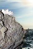 Seashell na rocha no céu do por do sol imagens de stock