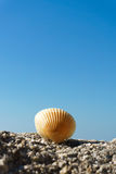 Seashell na skale Zdjęcia Royalty Free