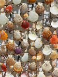 Seashell natural background Stock Image