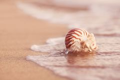 Seashell nautilus on sea beach with waves under sunrise sun ligh Stock Images