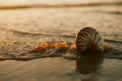 Seashell nautilus on sea beach under sunset sun light Royalty Free Stock Images