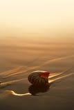 Seashell nautilus on sea beach under sunset sun light Stock Photography