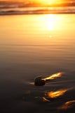 Seashell nautilus on sea beach under sunset sun light Stock Images