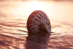 Seashell nautilus on sea beach with waves under sunrise sun ligh Royalty Free Stock Images