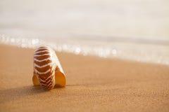 Seashell nautilus on sea beach with waves under sunrise sun ligh Stock Image