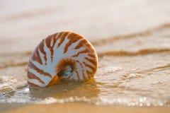 Seashell nautilus on sea beach with waves under sunrise sun ligh Royalty Free Stock Image