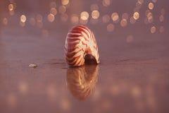 Seashell nautilus on sea beach with waves under sunrise sun ligh Royalty Free Stock Photography