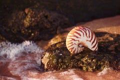 Seashell nautilus on sea beach with waves under sunrise sun ligh Royalty Free Stock Photos