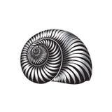 Seashell nautilus. Sea shell set ingraved  illustration Stock Photos