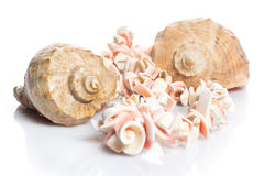 Seashell and necklace. Seashell and beautiful necklace on white background Stock Photography