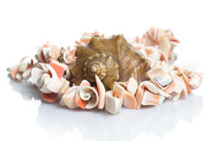 Seashell and necklace. Seashell and beautiful necklace on white background Royalty Free Stock Image