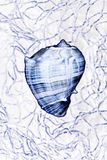 Seashell in net. Manipulated seashell in net Royalty Free Stock Image