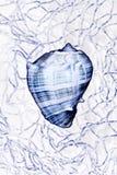 Seashell in net. Manipulated seashell in net stock illustration