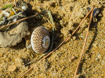Seashell next to debris Royalty Free Stock Image