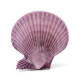 Seashell no fundo branco Fotografia de Stock Royalty Free