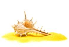 Seashell no macro amarelo da areia fotografia de stock