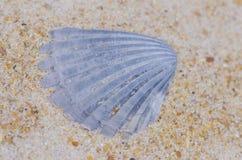 Seashell at ocean beach backdrop wallpaper Royalty Free Stock Photos