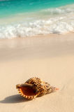 Seashell and ocean wave Stock Photo