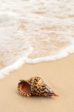 Seashell and ocean wave Royalty Free Stock Images