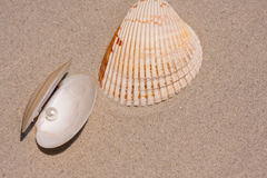 Seashell And Oyster Shell With Pearl Stock Photo