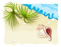 Seashell with palm leafs and ocean wave Royalty Free Stock Images