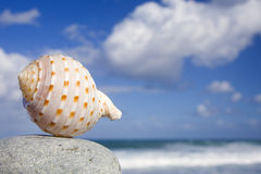 Seashell par le rivage Photo stock