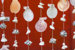 Seashell pattern curtain and red wall Stock Photography