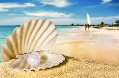 Seashell with pearl. Stock Photos