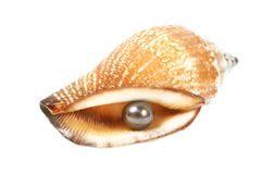Seashell with pearl Royalty Free Stock Image