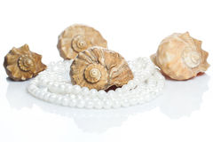 Seashell and pearl necklace. Seashell and beautiful pearl necklace on white background Stock Photos