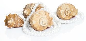 Seashell and pearl necklace. Seashell and beautiful pearl necklace on white background Stock Photo