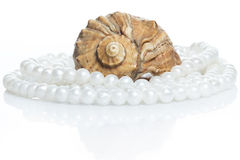 Seashell and pearl necklace. Seashell and beautiful pearl necklace on white background Stock Images