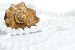 Seashell and pearl necklace. Seashell and beautiful pearl necklace on white background Royalty Free Stock Image