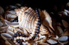 Seashell. With pearl necklace lying among other small shells Royalty Free Stock Photos