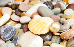 Seashell and pearl on the shore Stock Photos