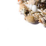 Seashell with pearls Royalty Free Stock Images