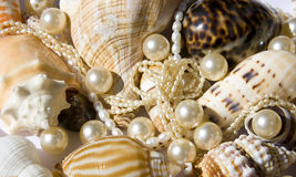 Seashell with pearls Stock Photos