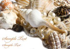Seashell with pearls Royalty Free Stock Photo
