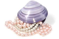 Seashell and pearls. Pearl necklace inside big seashell, isolated on white Stock Photos