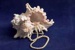 Seashell & pearls. Pink and white sea-shell with string of pearls gushing from its opening Stock Photo