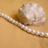Seashell and pearls. On the beach stock photo