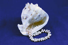 Seashell and pearls Stock Image