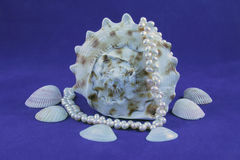 Seashell and pearls Stock Photography