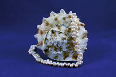 Seashell and pearls Royalty Free Stock Image