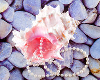 Seashell and pearls Royalty Free Stock Photos