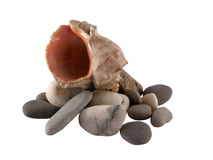 Seashell on a pebble isolated Stock Image