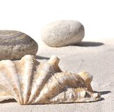 Seashell and pebbles on sand Stock Photos