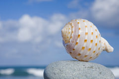 Seashell pela costa Foto de Stock