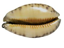 Seashell-pendant Stock Images