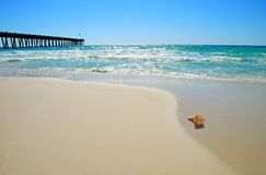 Seashell by Pier. Lone seashell on pristine beach with ocean and fishing pier in background Stock Photography